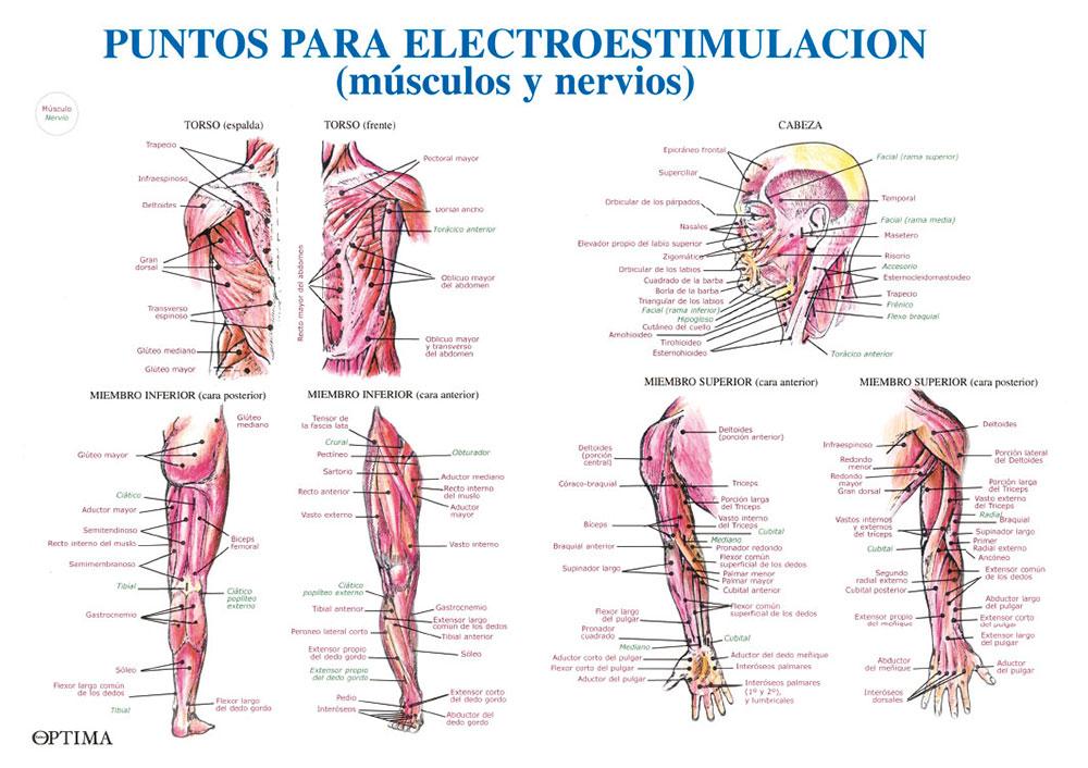 Puntos de electroestimulación