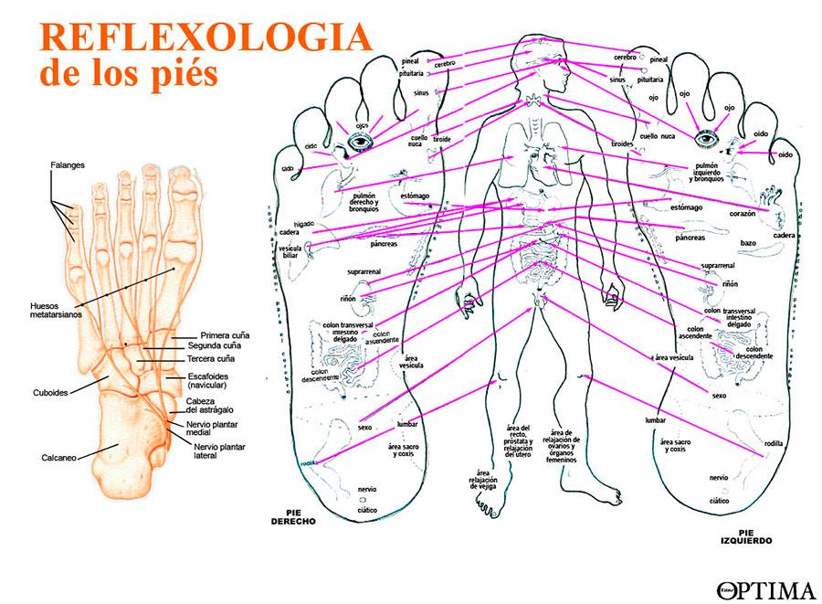 Reflexología de los pies